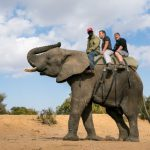 Elephant-Back-Safari-Idube-1