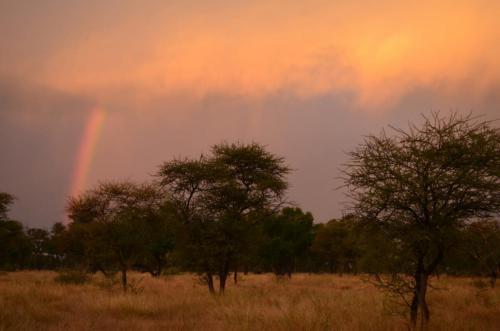 Idube Safaris Game Reserve & Surrounds